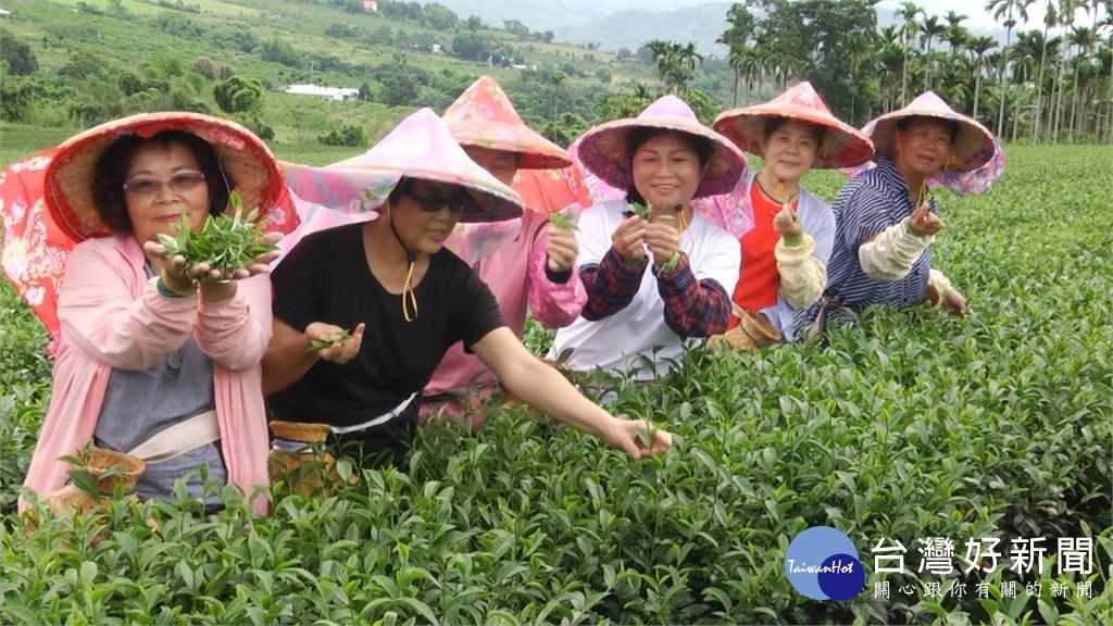 台東一日農遊 體驗採茶、做蛋捲、賞田園風光