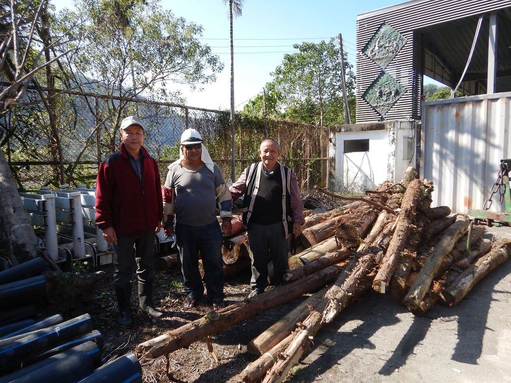 中部核准首例!原民鋸木賽缺木料 林管處伸援國有材